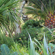 Mon jardin méditerranéen