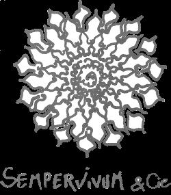 Sempervivum & cie