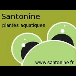 Santonine
