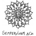 Sempervivum & cie