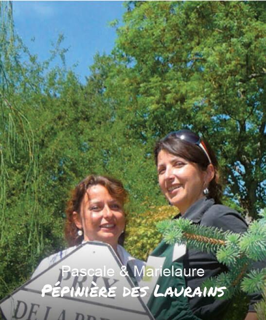 Pépinière des Laurains, Conifères